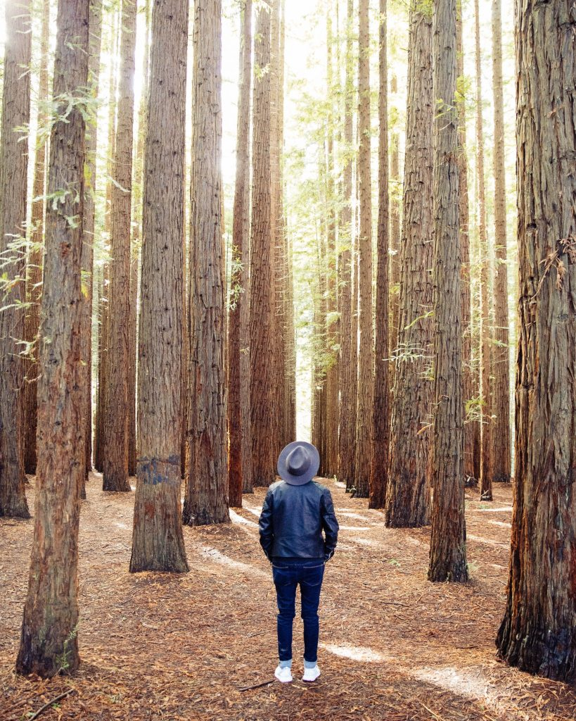 a man standing in forest looking up at tall trees